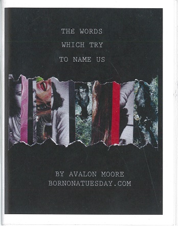 Cover Image for The Words Which Try to Name Us