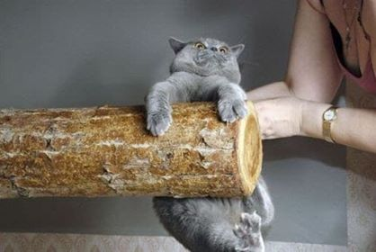A picture of a cat hanging onto a log